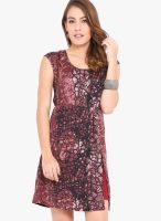 Trend Arrest Maroon Printed Shift Dress